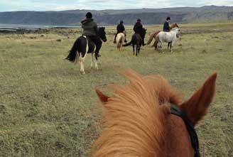 family-tour-Icelandic-horse-01.jpg