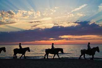 alhestar-special-icelandic-horse-03.jpg