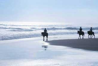 alhestar-special-icelandic-horse-01.jpg