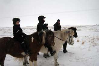 family-tour-Icelandic-horse-02.jpg