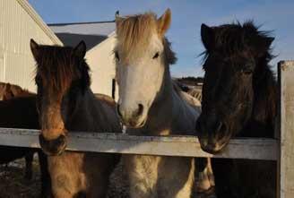 ICELAND-BLUE-LAGOON-HORSE-RIDING-HOT-SPRING-RIDE-01.jpg