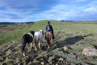 Icelandic-horse-rideingGOLDEN-CIRCLE-COMBINATION-02.jpg