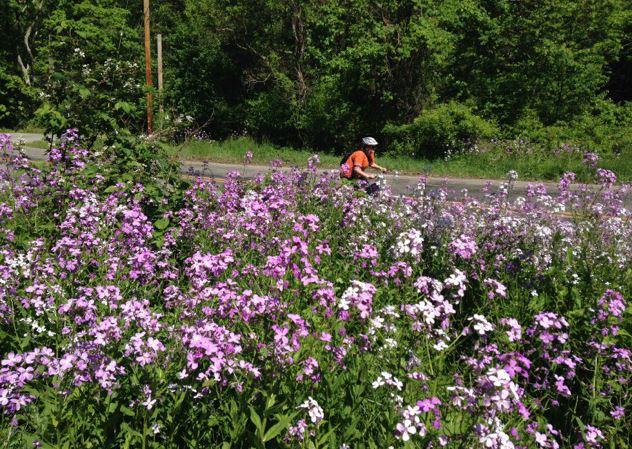 Farm to Table Bike Ride