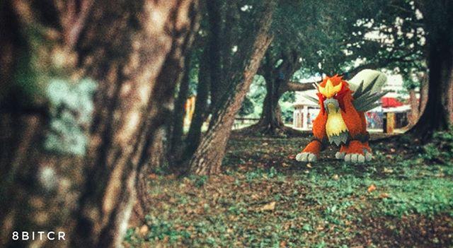 Pokémon 244: Entei contiene el fulgor del magma en su interior. Se cree que este Pokémon nació de la erupción de un volcán. Escupe numerosas ráfagas de fuego que devoran y reducen a cenizas todo lo que tocan. #PokemonGO #belegendary