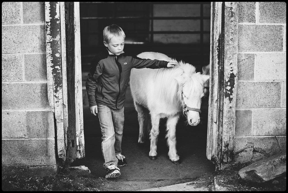 Boy pets mini horse.