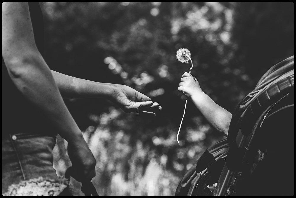 Little girl hands mom dandelion.