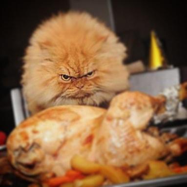 Happy #turkeyday2018 from all of us at #ICEBIRG!  #thanksgiving #stuffed #whiskeyandmashedpotatoes