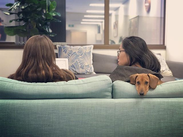 Canine collaboration at TSB HQ. #thestoryboxes #officedog #filmproduction #storytellers