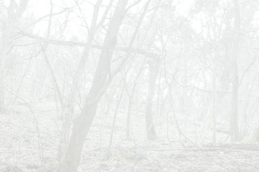 4_FluoriteFantasia.jpg