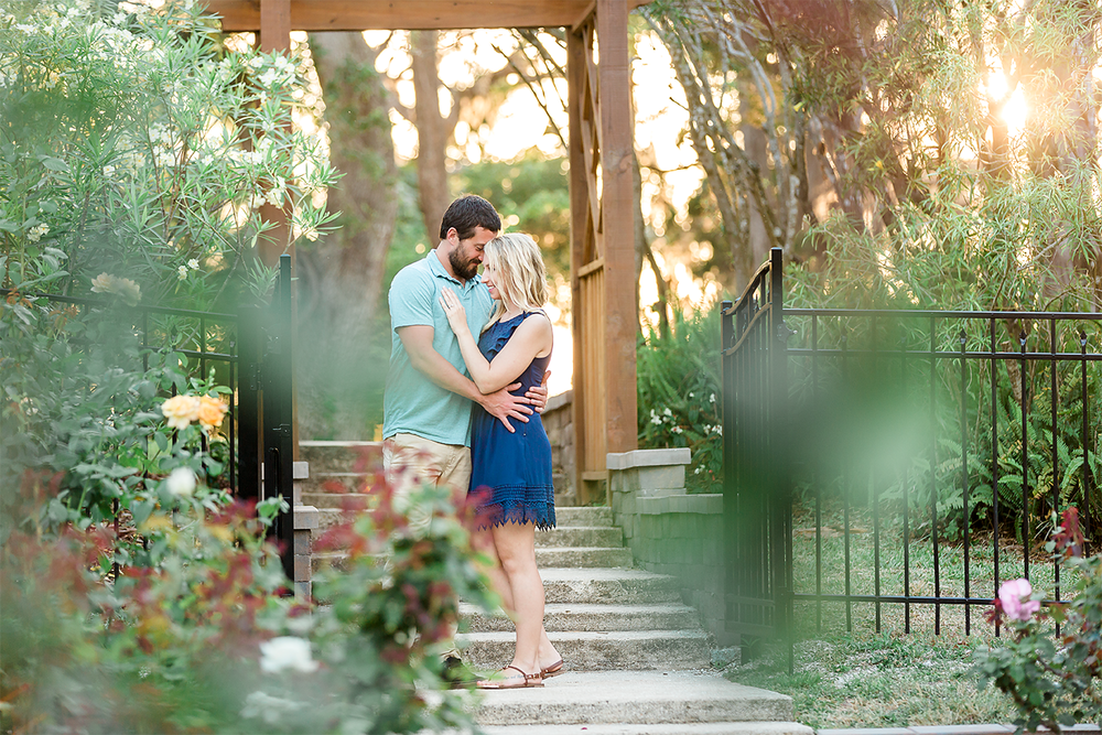 engagement pictures in rose garden