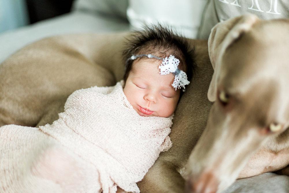 newborn and a dog newborn pictures