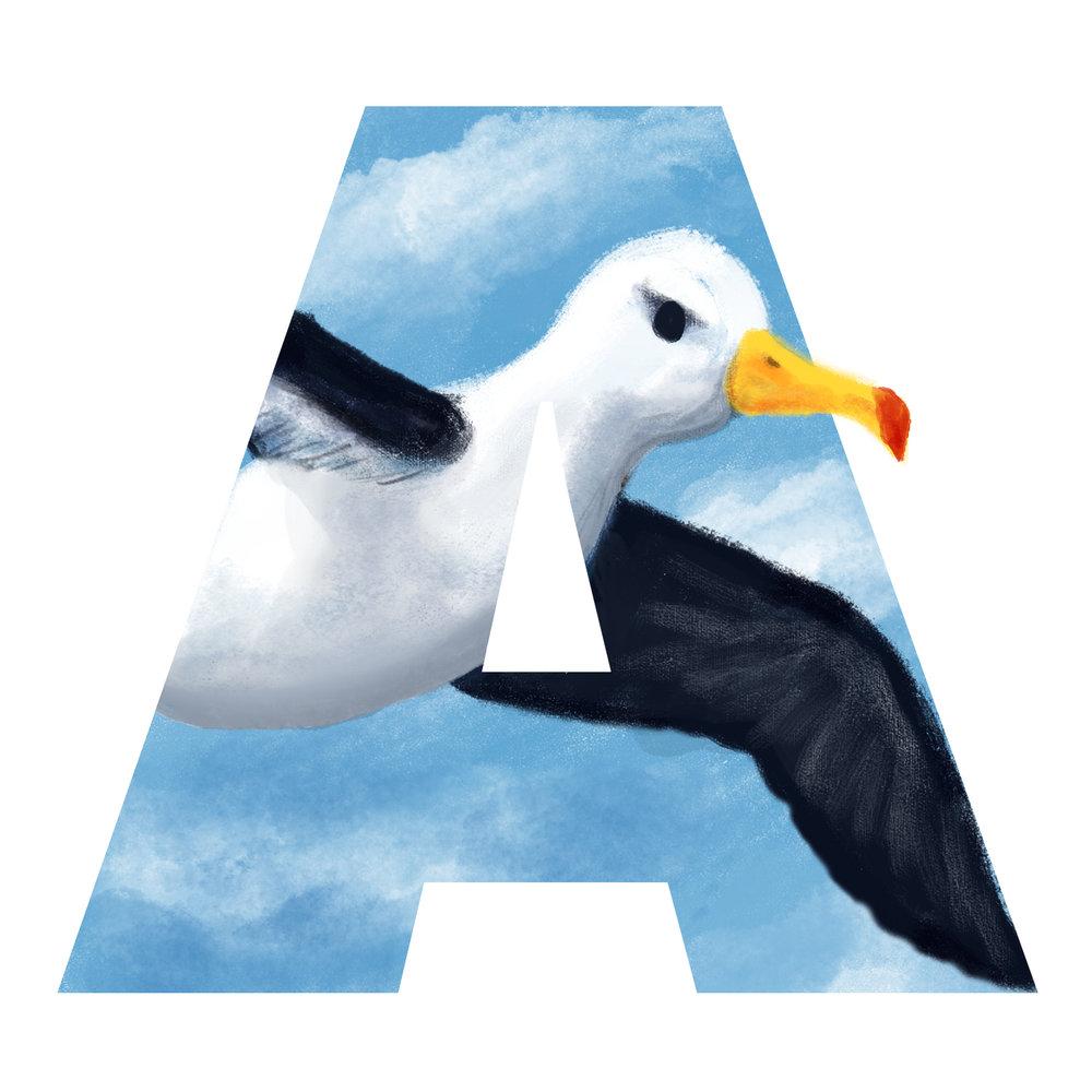 A-for-Albatross.jpg