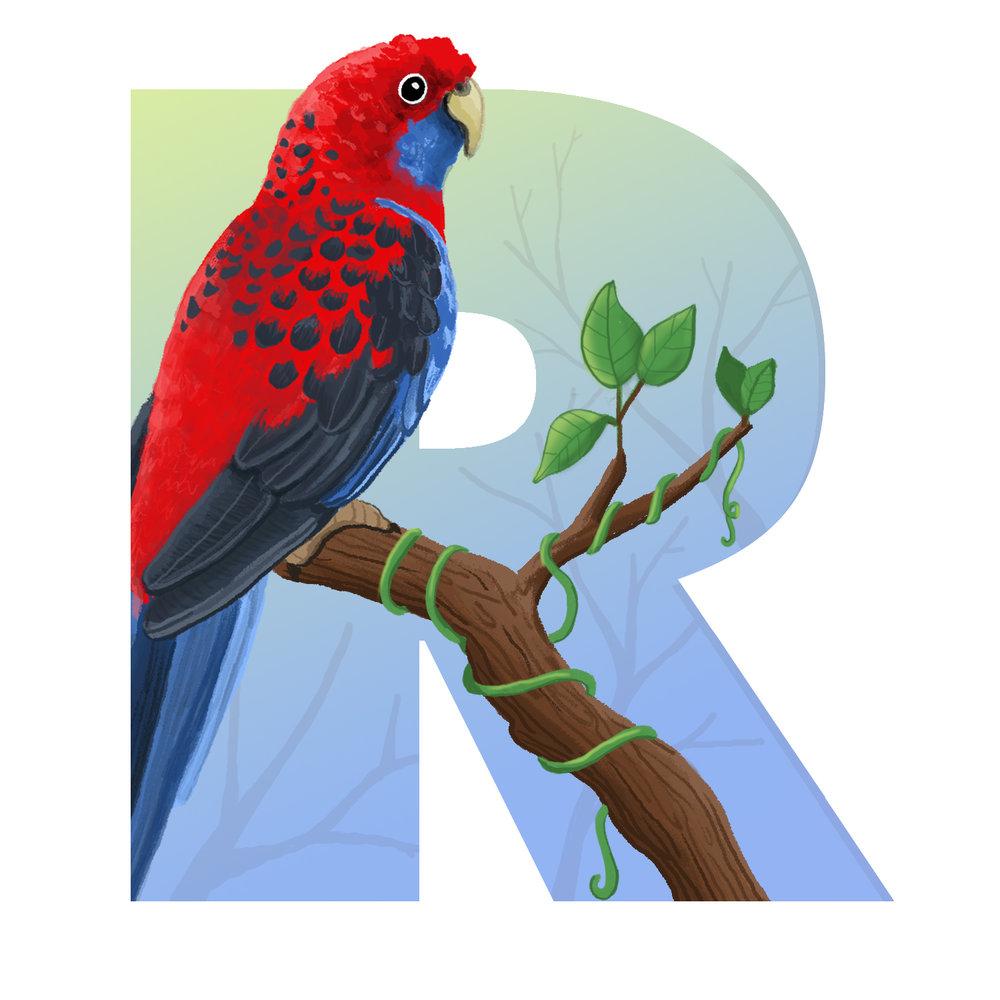 R-for-Rosella.jpg