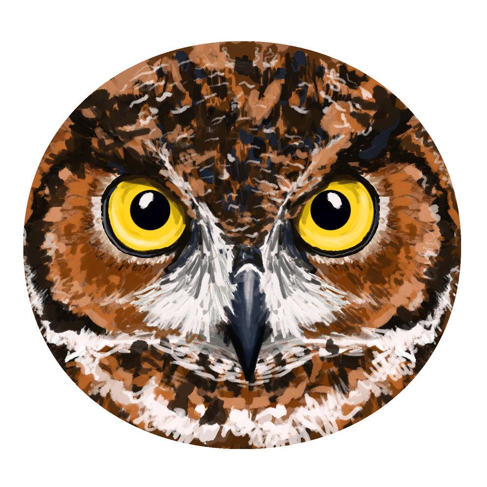 O-for-Owl.jpg