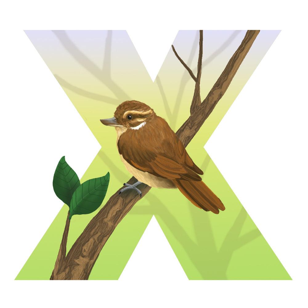 X-for-xenops.jpg