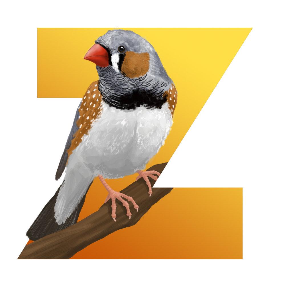 Z-for-ZebraFinch.jpg
