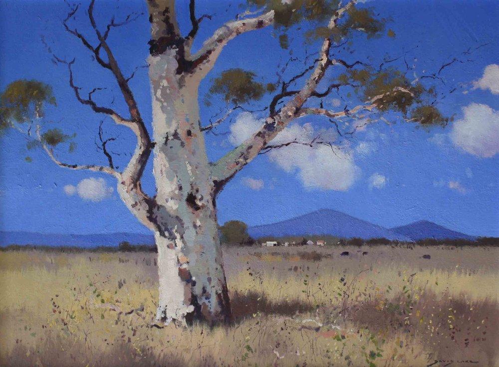 Dry Summer - Mullaley