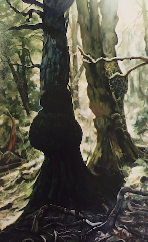 Enchanted Forest by Don Talintyre FRAS