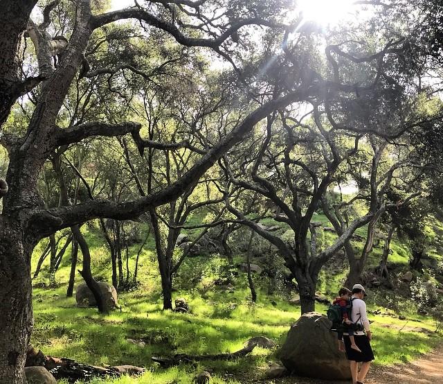 A natureza é sagrada e precisa ser cuidada, é preciso entender que somos a natureza, cuidar da natureza, é cuidar de nós mesmos... 🌍🌎🌏 Mother Earth wrapping my treasures... 💚 #motherearth #nature #naturelover #wearenature #naturezaperfeita