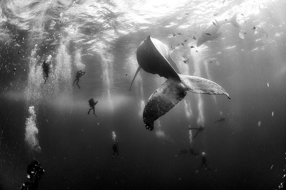 """""""Whale Whisperers""""  Anuar Patjane Floriuk - México  Segundo lugar en la categoría individual."""