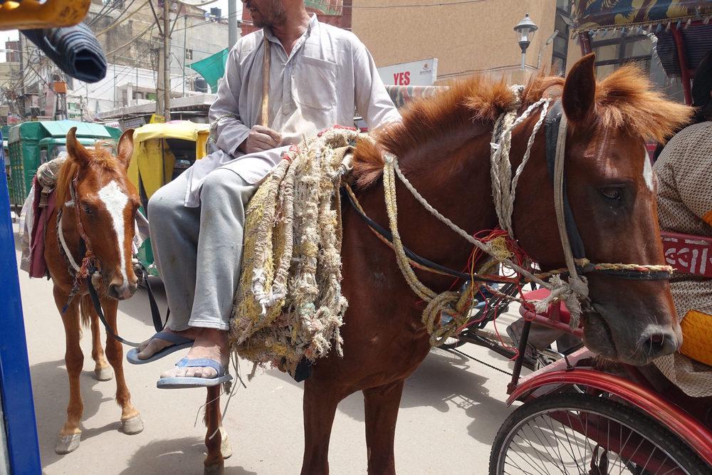horse rider delhi