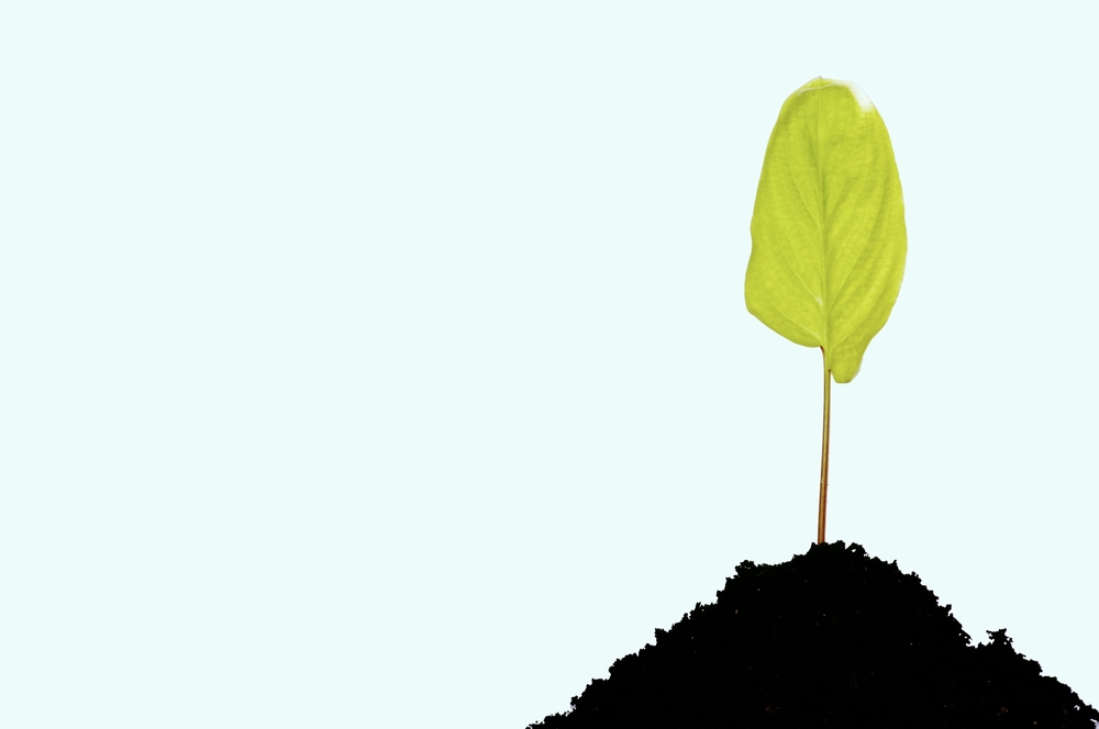 young-green-plant_QkleBV.jpg