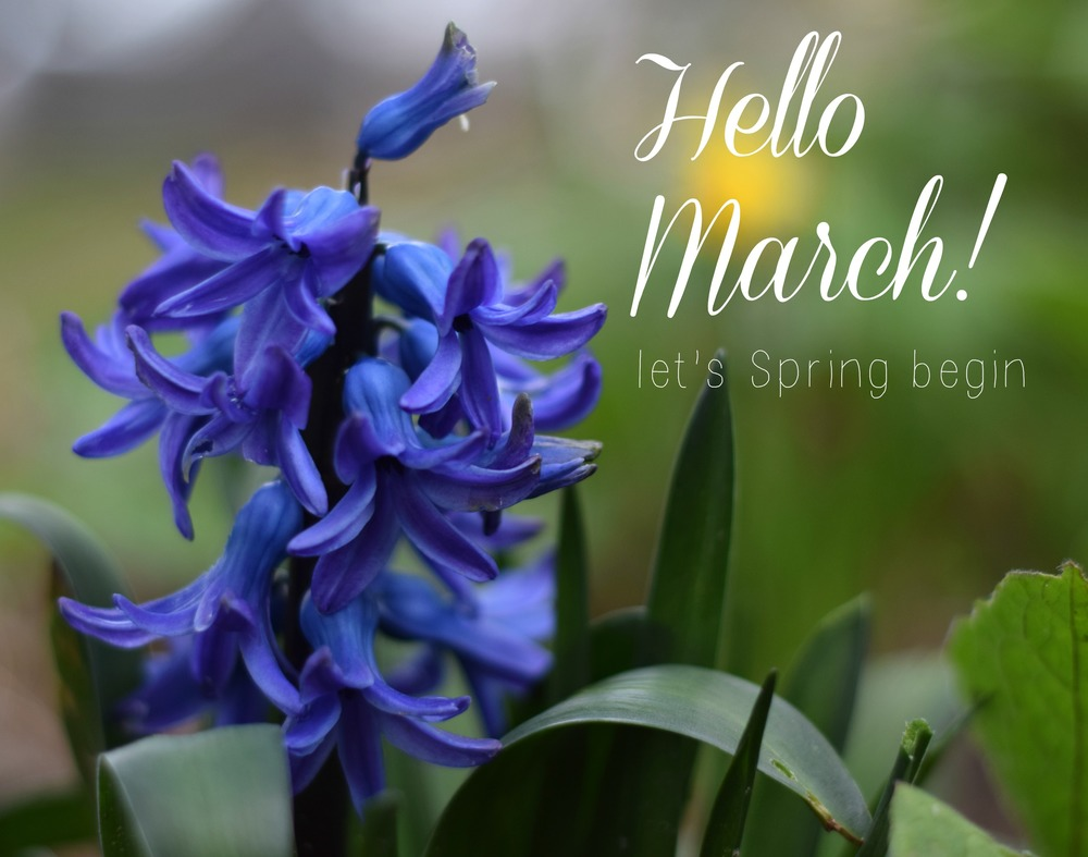 Hello March! | www.theprettypeony.com