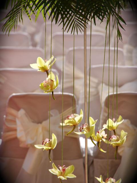 flores masia heretat sabartes.png