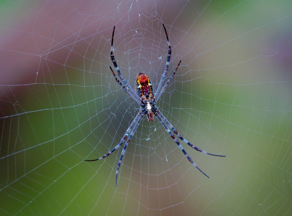 spider-3202834_1280.jpg