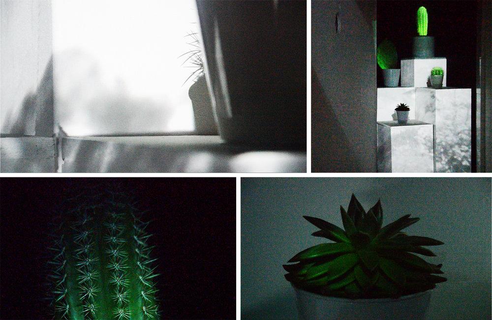 plantpics.jpg