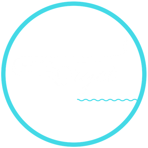 Orget Sadiku Entertainment
