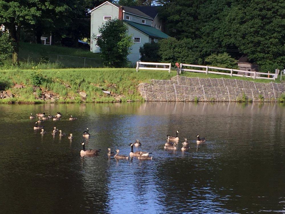 geese on river.JPG