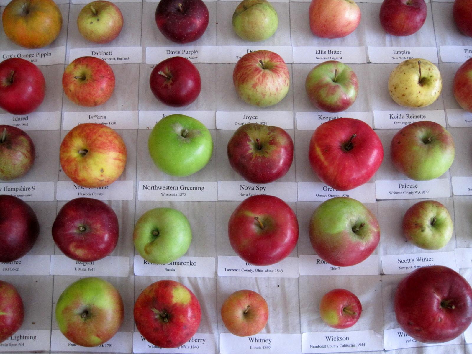 apple display1