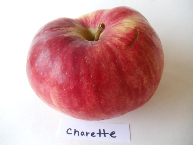 charette.jpg