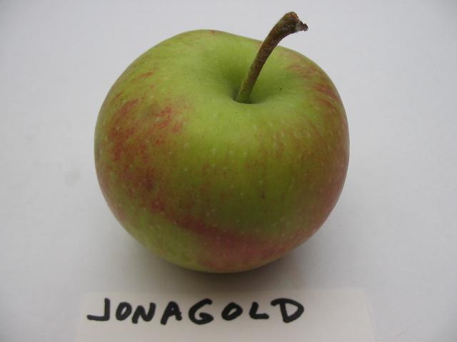 jonagold-cavity.jpg