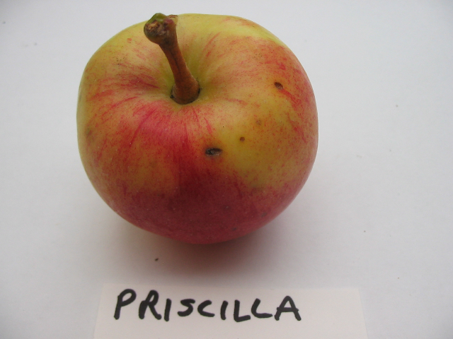priscilla-cavity.jpg