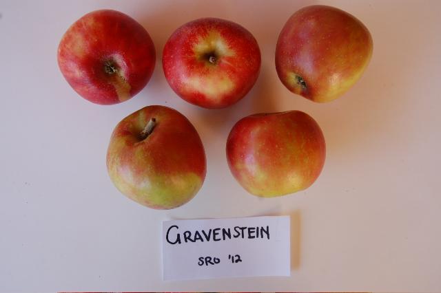 redgravenstein2012-3.jpg