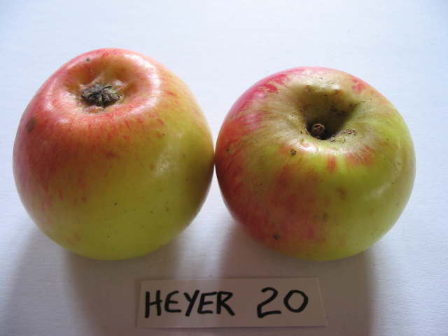 heyer20cb.jpg
