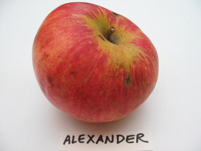 alexander-cavity.jpg