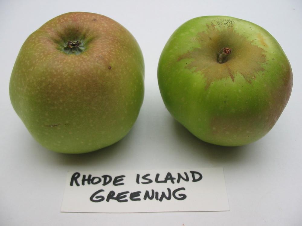 rhode-island-greening-jpg.jpg