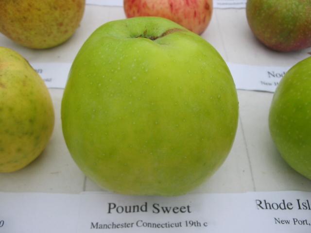 pound-sweet.jpg