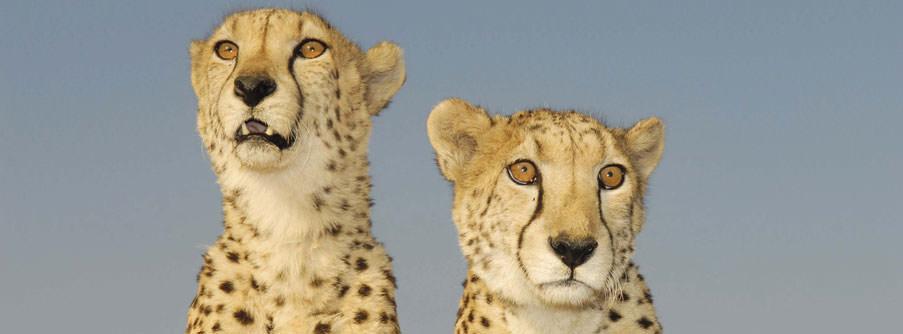 Joburg Lion park 2.jpg