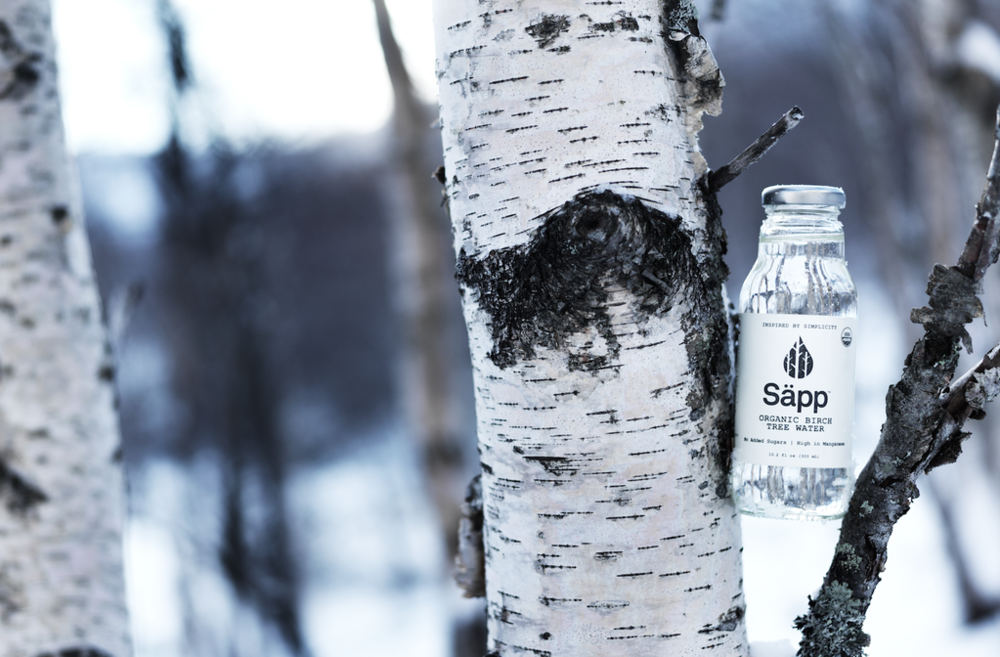 birch water new york city sapp nature