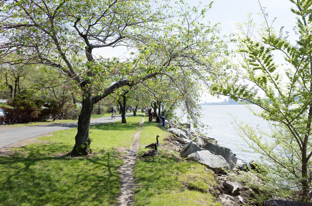 """cherry walk, riverside park"" by Charley Lhasa is licensed by CC BY-SA 2.0"