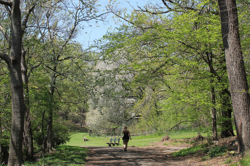 """Spring walk in Prospect Park"" by Teri Tynes is licensed by CC BY 2.0"