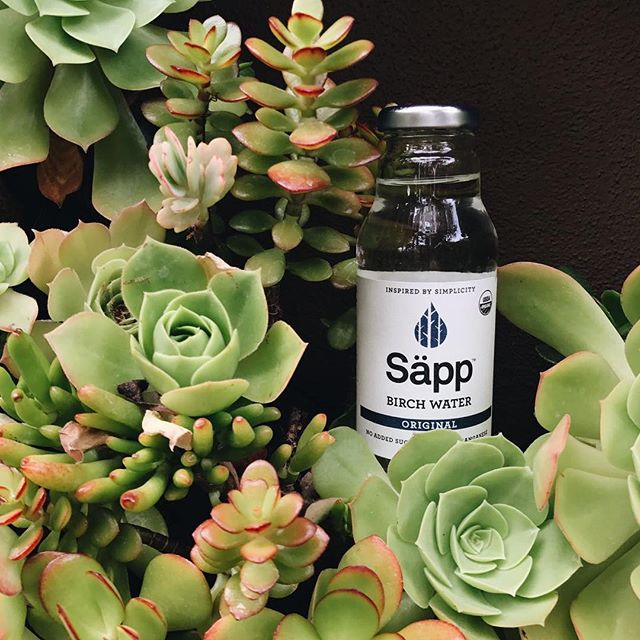 At Säpp, our vision is to coexist with nature and appreciate its abundant benefits. Our birch waters are always organic, sustainable, and wild harvested. We don't settle for anything less - because we know you wouldn't. #sapplife