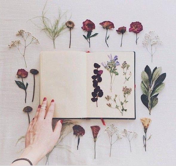 floranity.jpg