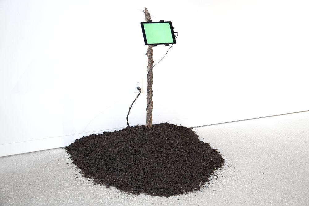 tree-facebook-install-2.jpg