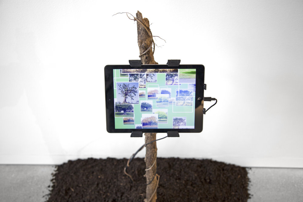 tree-facebook-install-1.jpg