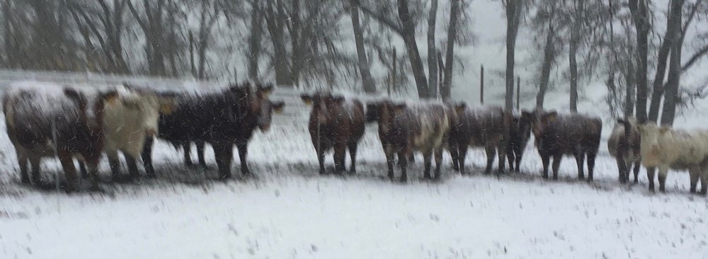 Whispering Hills Farm, Dec. 2016--We do get blizzards occasionally in Oregon